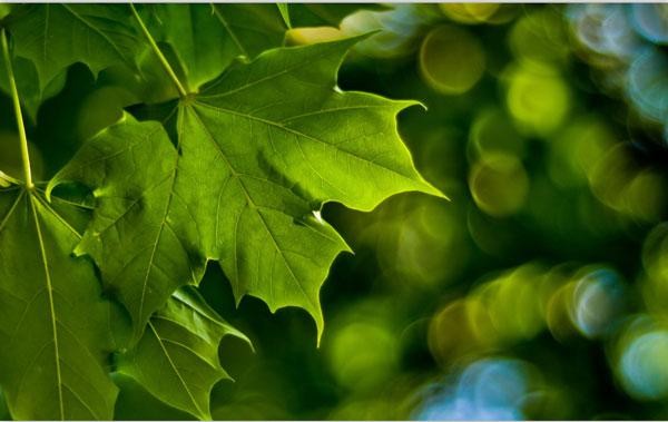 绿色安装护眼高清壁纸下载_绿色安装护眼高清壁纸 V1.0 安装